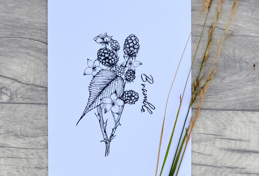 Bramble illustration print  - Crisp