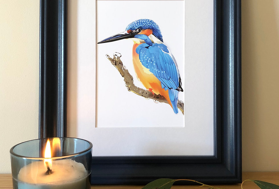 Colour pop framed Kingfisher print