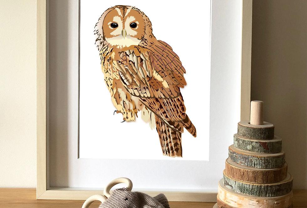 Tawny Owl illustration print