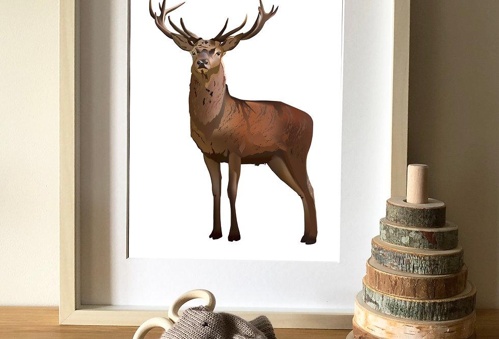 Red Deer Stag illustration print