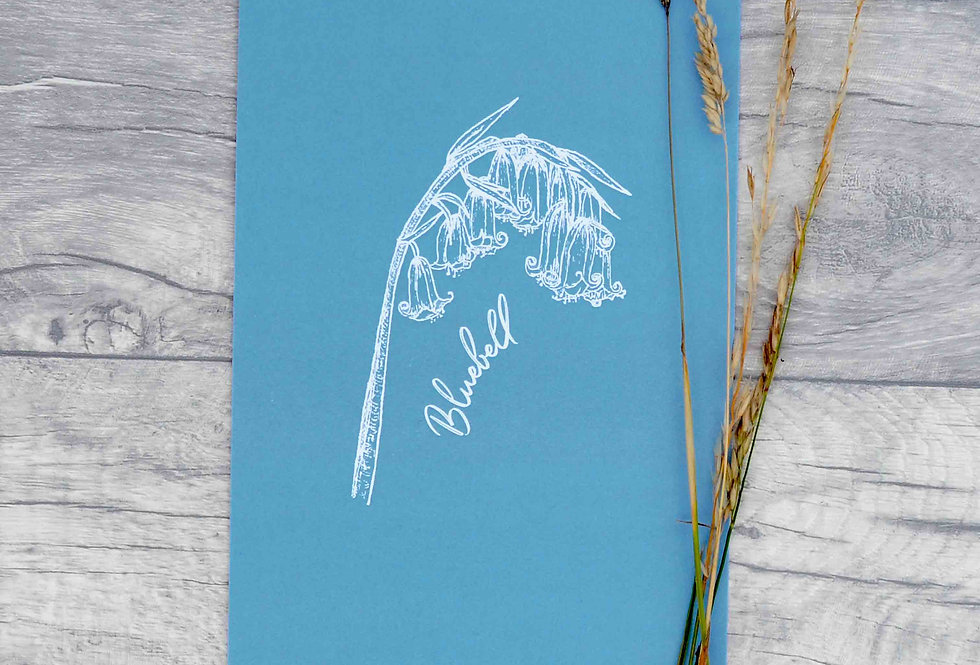 Bluebell illustration print  - Cornflower