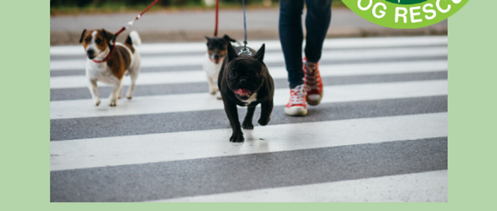 Oakwood Dog Rescue- '1 Mile-a-Day' Challenge