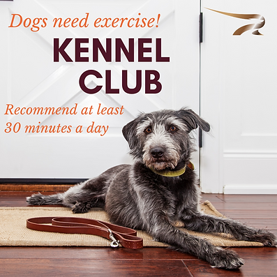 kennel club_exercise.png