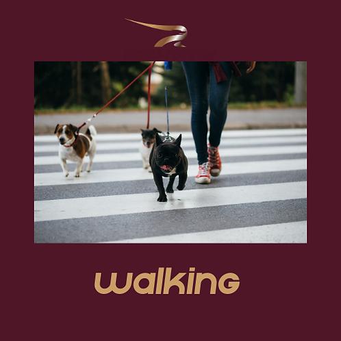 December Walk - 150 miles