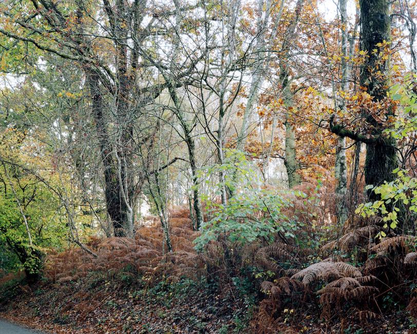 Verges in Autumn