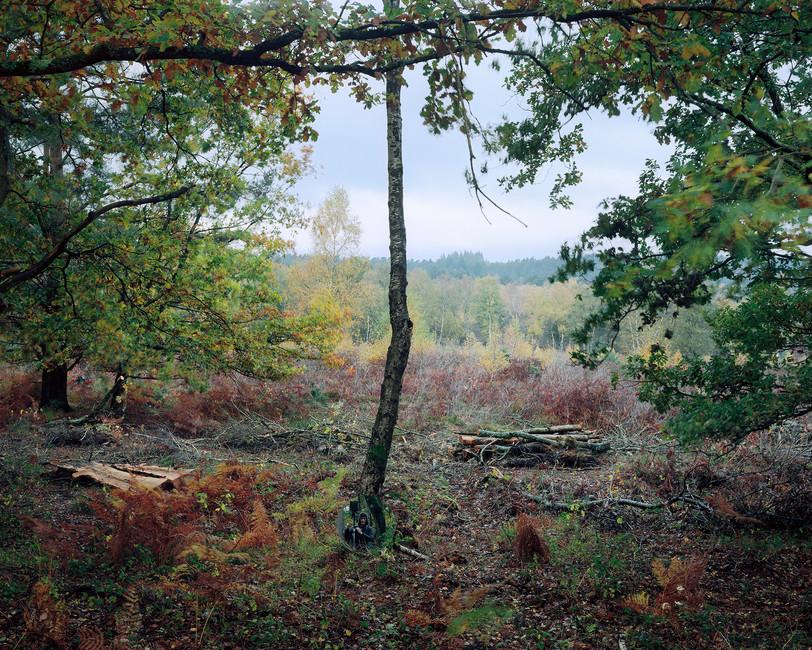 Landscape with Oak Trees & a Hunter