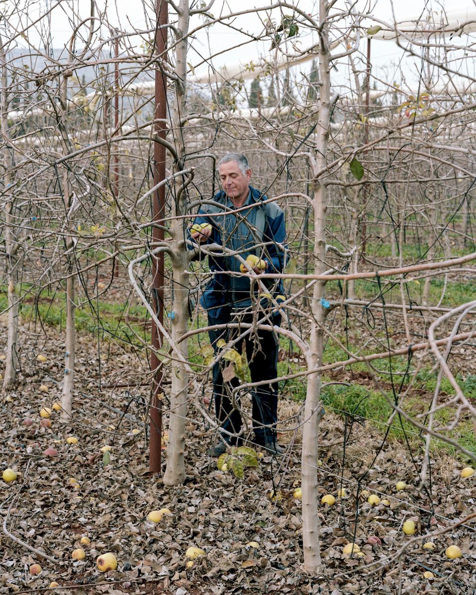 Apples, Kibbutz Yiftach, 2015