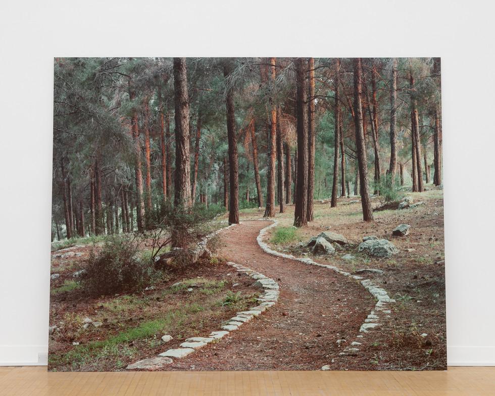 Stone Carved Trail, Ein Zeitim, Galilee, Israel (Installation-2018). 264x330cm