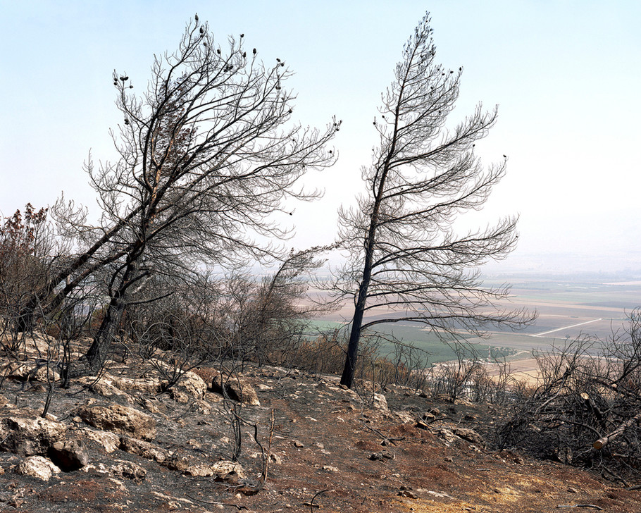 After The Fire (Pine Grove), Overlooking The Hula Valley, 2016