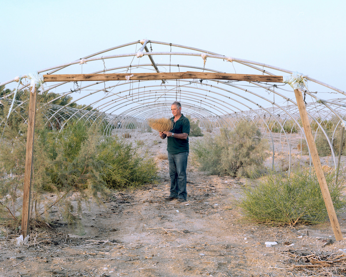 Greenhouse, Pharan, The outback, 2016