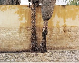 Palms of Tel Aviv