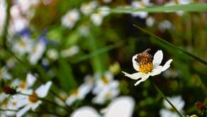 Starting Your Pollinator Garden