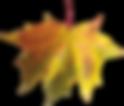 37-autumn-png-leaf.png