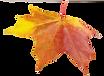 purepng.com-autumn-leafautumnleavesplant