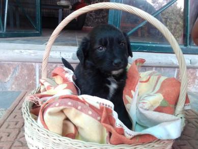 La perrita/ The puppy