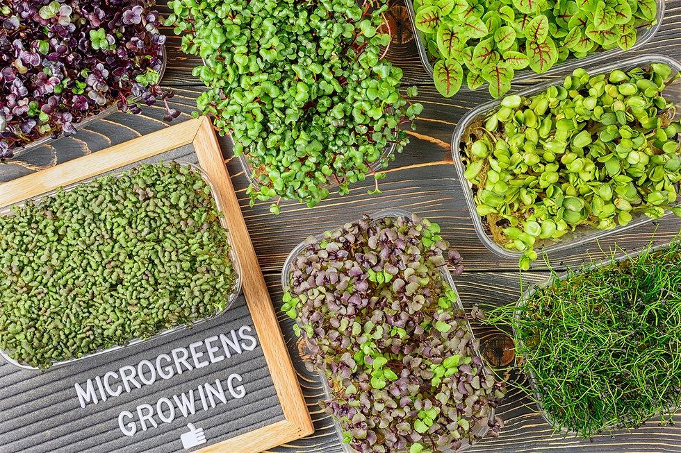 micro greens varieta (1275 x 850).jpg