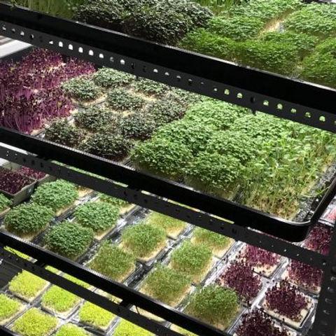 led microgreens.jpg
