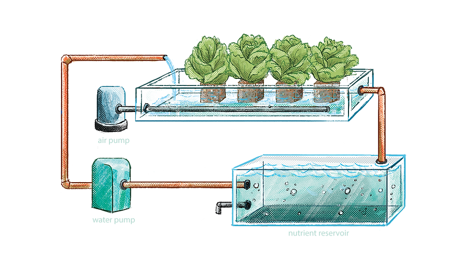 concept aquaponics .png