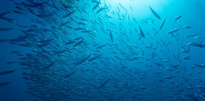 banco di pesci.png