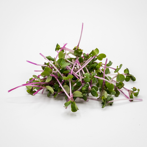 1599166012Central Red Microgreens.png