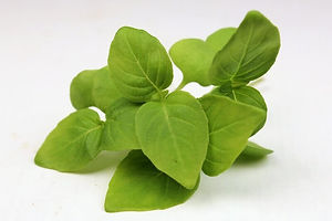 lemon-basil-microgreen-leaves.jpg