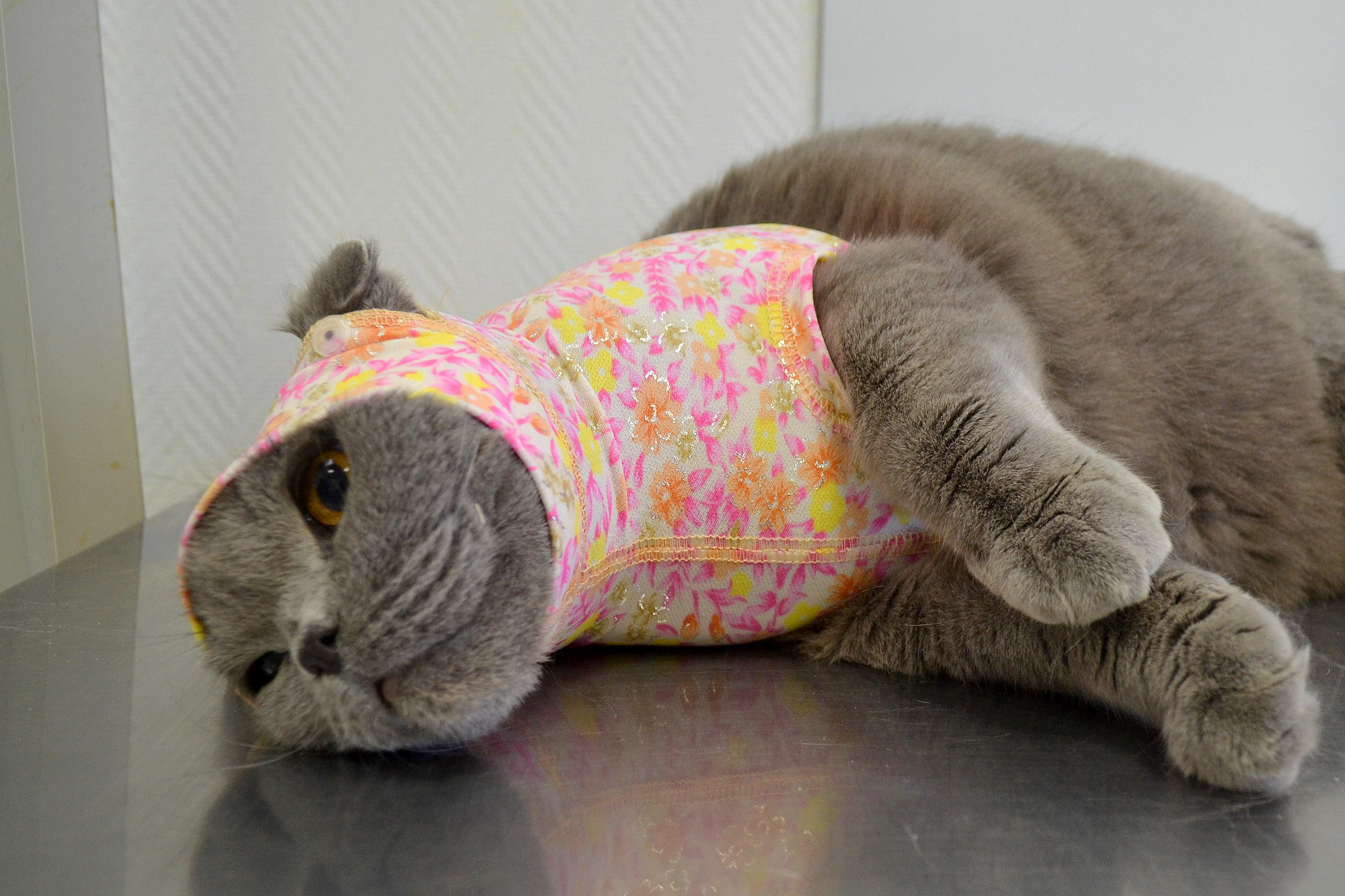 Капюшон-бандаж для кошек RELAV