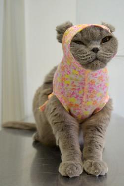 Капюшон-бандаж для котов RELAV