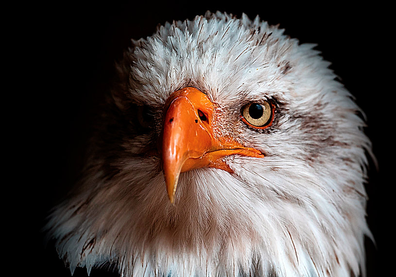 aguia-rgb.jpg