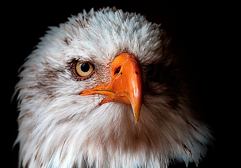 aguia-rgb_edited.jpg