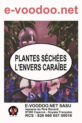 Plantes Séchées L'Envers Caraïbe