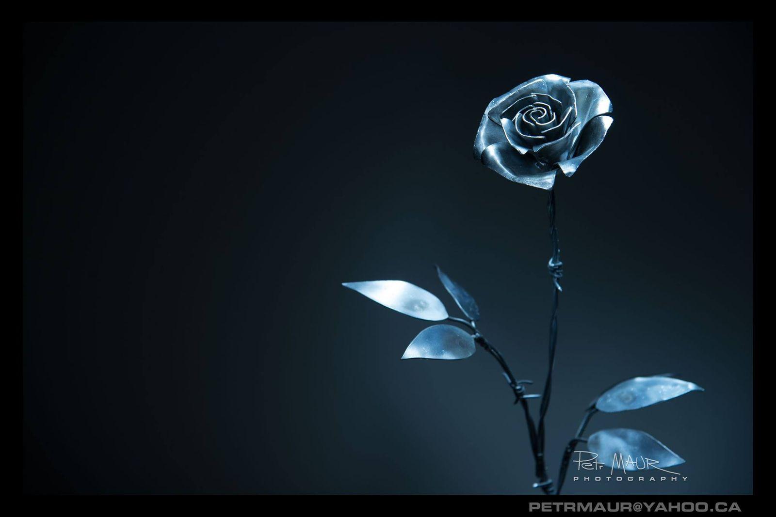 Rose ___ - by Petr Maur