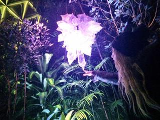 Enchanted Nights