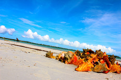 Steph Limage - Turks & Caicos