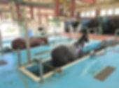 J Horse facility.jpg