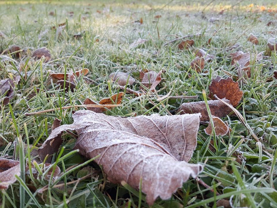 Comment bien préparer son jardin pour l'hiver ?   Embellissement Rivière-du-Loup