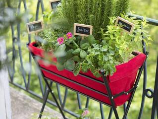Inspiration jardin : les potagers en pot