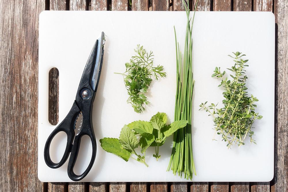 Les fines herbes à avoir absolument | Embellissement Rivière-du-Loup