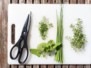 Les fines herbes à avoir absolument dans votre jardinière !