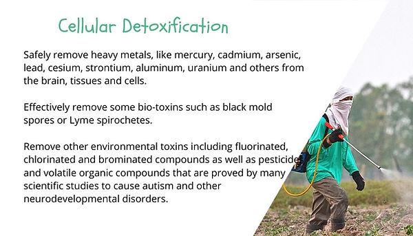 cellular detoxification.jpg