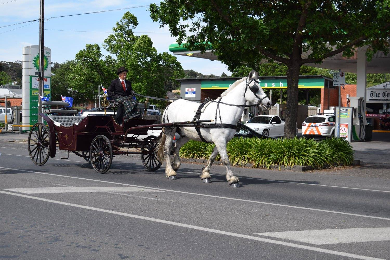 Horse & Carriage Ride - 2015 Festival