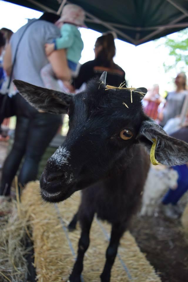 Animal Farm - 2014 Festival