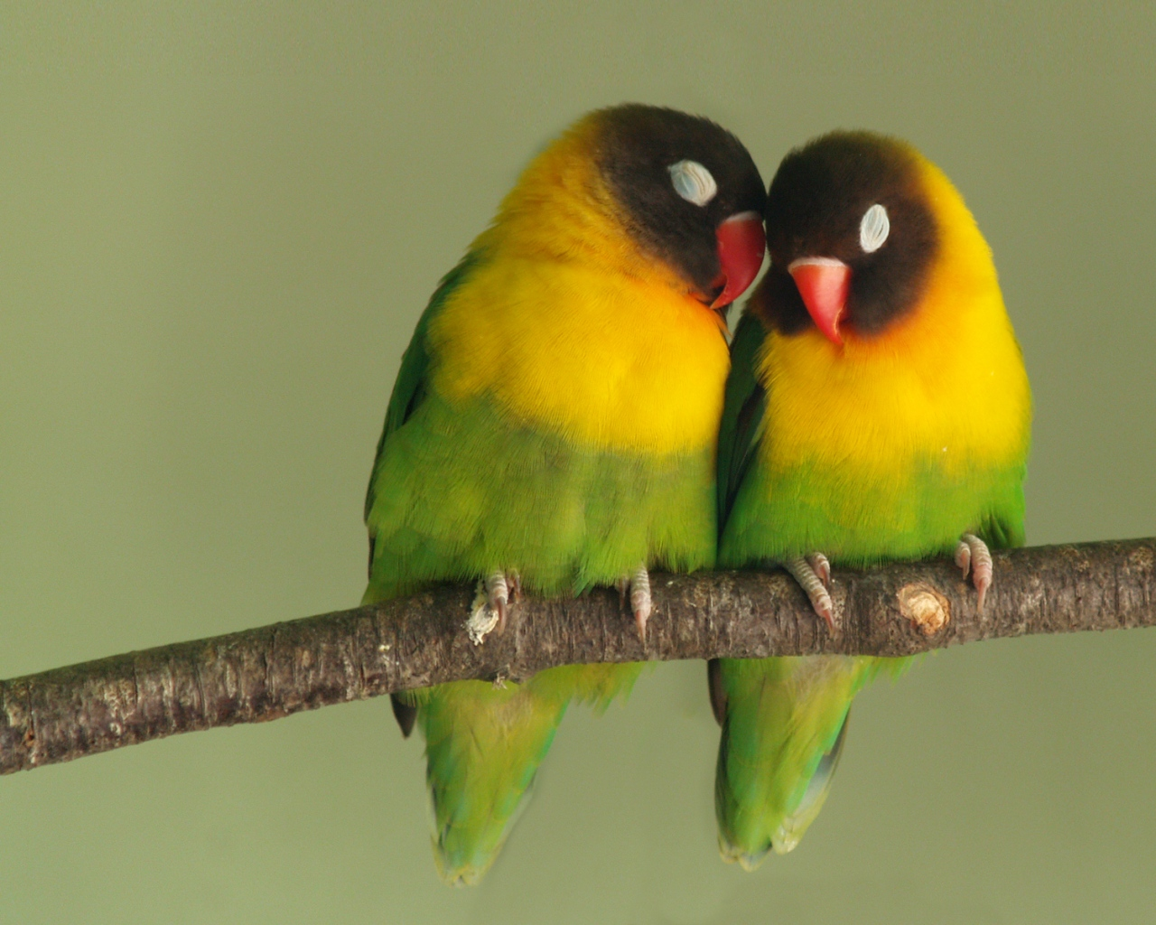 twolovebirds