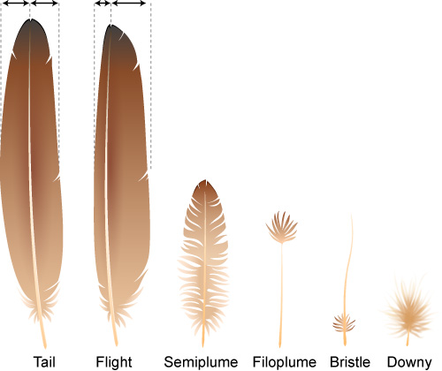 feather_types