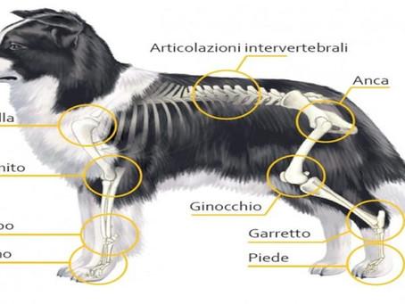 L'importanza della condroitina per i nostri cani