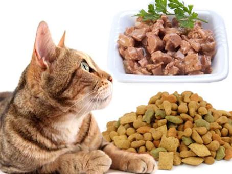 Consigli nutrizionali per i nostri gatti
