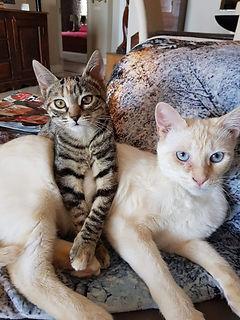 Paulines cats.jpg
