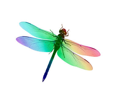 Digital illustration of a dragonfly with