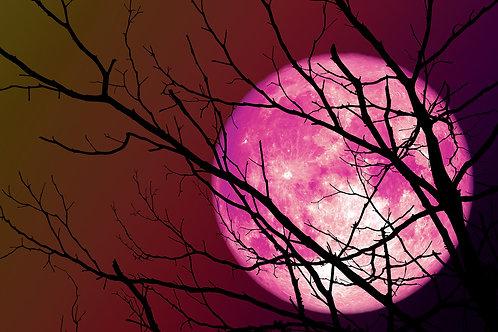 Full Moon Reading