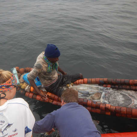 Squid fishers catch.jpg