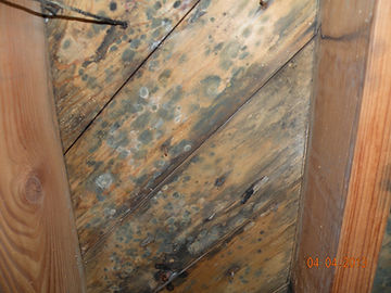 Moldy subfloor.JPG